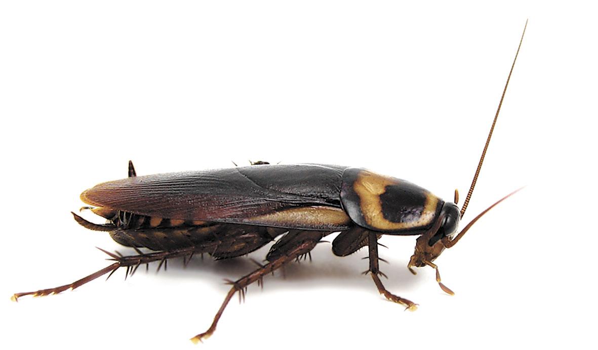 Черные насекомые в квартире фото